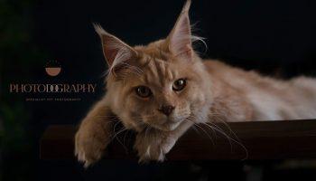 Feline Neuter
